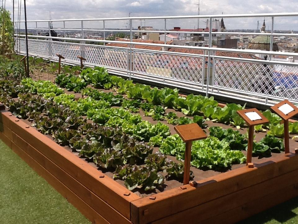 Huertos urbanos beneficios de la agricultura en la ciudad for Diseno de jardines en parcelas