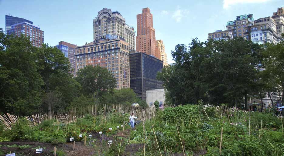 Huertos urbanos (beneficios de la agricultura en la ciudad)