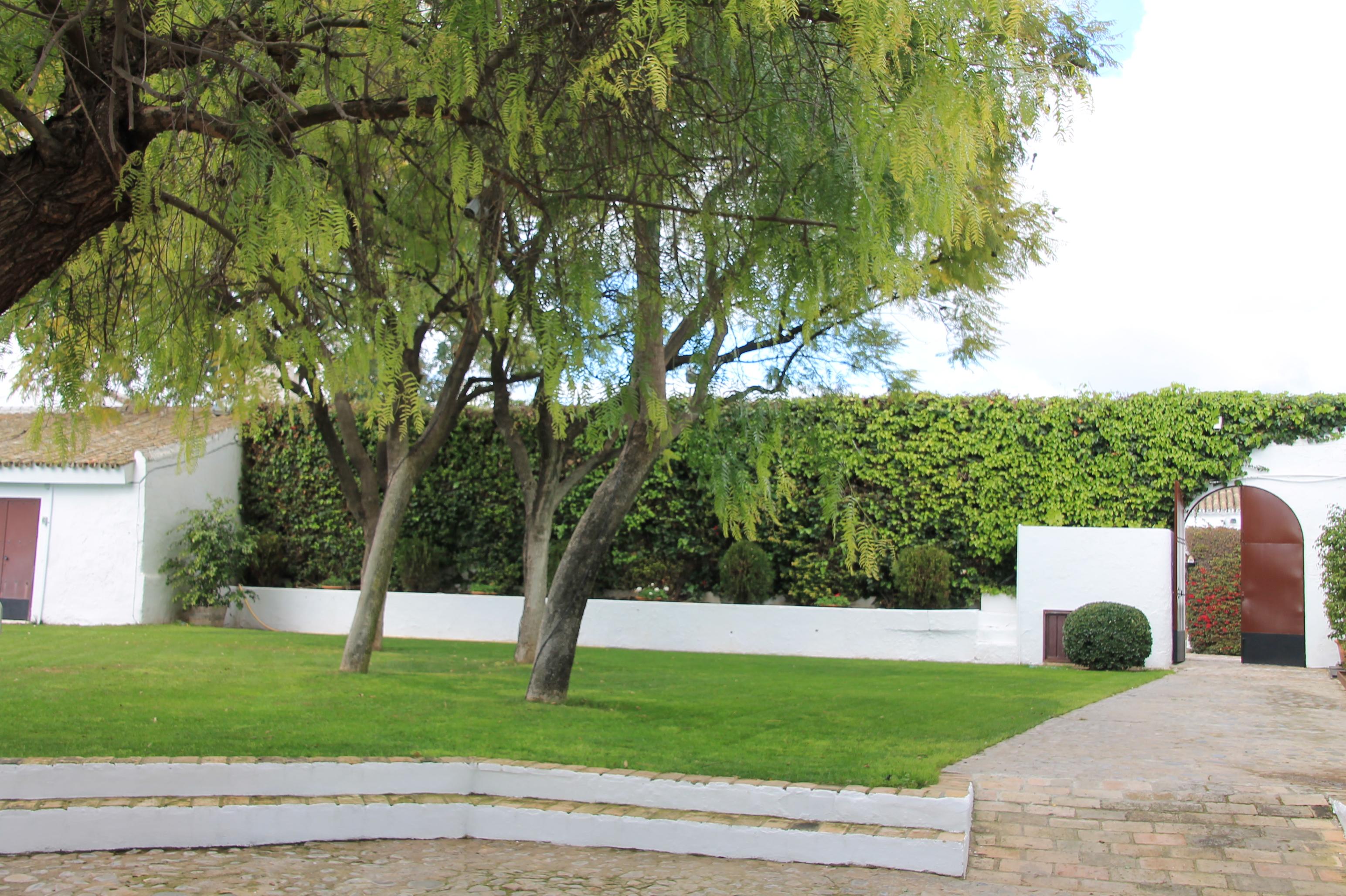 Mantenimiento Jardines En Sevilla