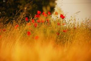 malas hierbas sevilla