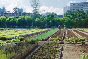 20101020-cuba_power_garden