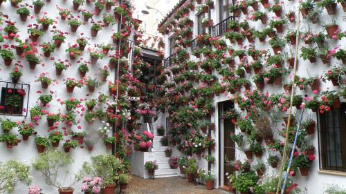 Los patios cordobeses, jardines verticales con mucho encanto